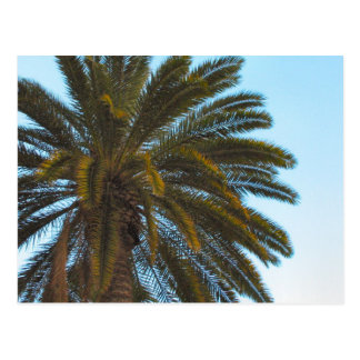Palmepostkarte Postkarte