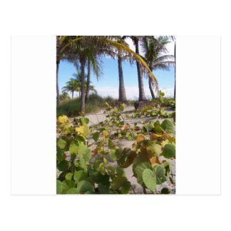 Palmtree Postkarte