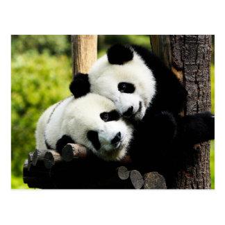 Panda-Bären Postkarte