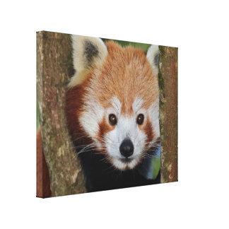 Panda-Porträt eingewickelte Leinwand Leinwanddruck
