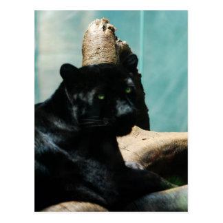 Panther mit Piercing Augen Postkarte