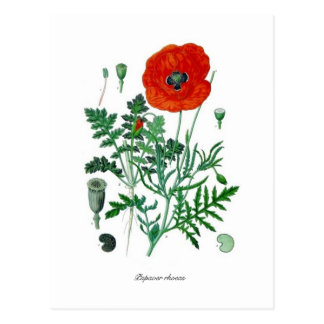 Papaver rhoeas postkarte
