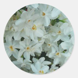 Paperwhite Narzissen-empfindliche weiße Blumen Runder Aufkleber