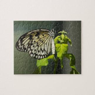 Papierdrachen-Schmetterlings-Puzzlespiel Puzzle