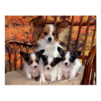 Papillon puppies with mum postkarte