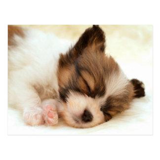 Papillon puppy postkarten