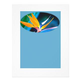 Paradiesvogel Briefpapier 21,6 X 27,9 Cm Flyer