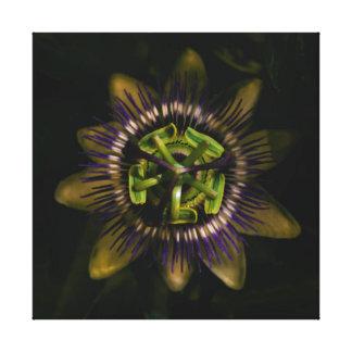 "Passionsblume 12"" X12""/25x25 cm Leinwanddruck"