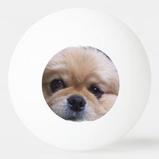 Pekingese Hund Tischtennis Ball