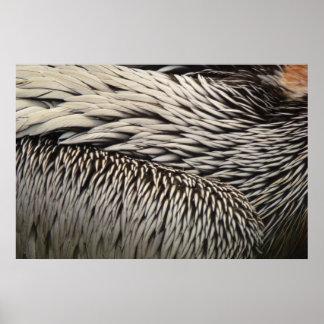 Pelikan versieht graues Natur-Foto mit Federn Poster