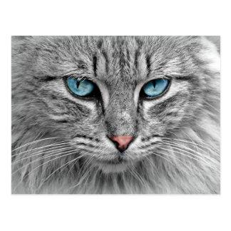 Pelzartige graue Katze mit blauen Augen Postkarte