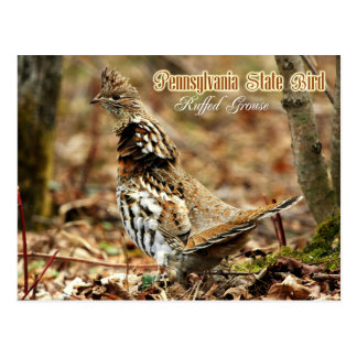 Pennsylvania-Staats-Vogel: Getrumpftes Waldhuhn Postkarte