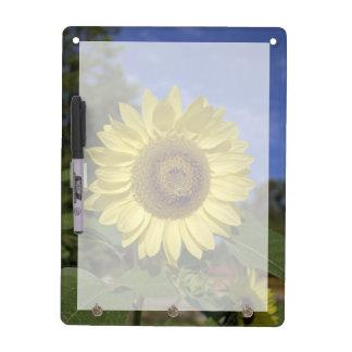 Perfekte Sommersonnenblume im blauen Himmel Memoboard