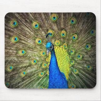 Pfau-Farbschönheit Mousepads
