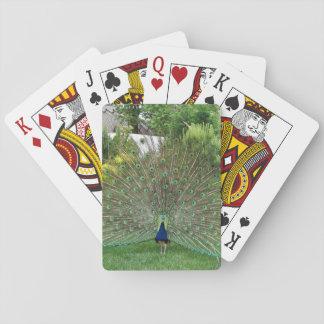 Pfau-Foto-klassische Spielkarten