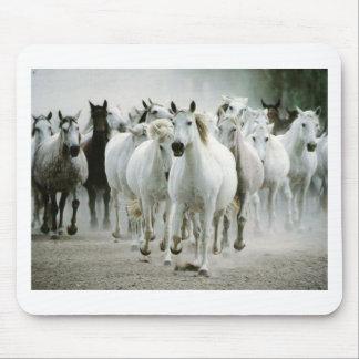 Pferd (1) mauspad