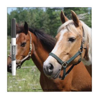 Pferde Whiteboards
