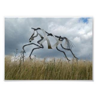 PferdeFoto-Druck Fotodruck