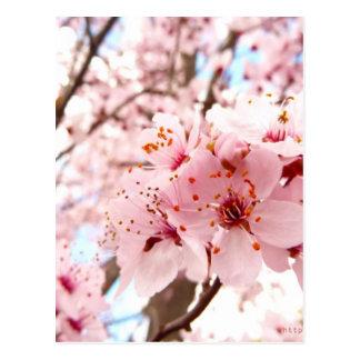 Pflaumen-Blüte Postkarte