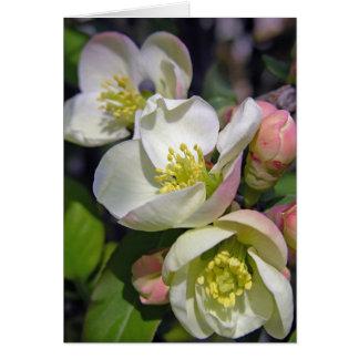 Pflaumen-Blüten Karte