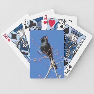 Phainopepla Spielkarten