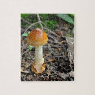 Pilz-Schönheit des verfaßten Fadens Foto Puzzle