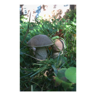 Pilze Bedrucktes Büropapier