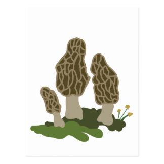 Pilze Postkarte