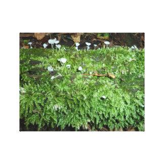Pilze und Moos Leinwanddruck