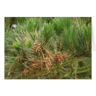 pinetree karte