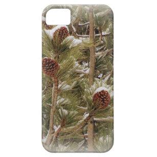 Pinetree Telefonkasten Schutzhülle Fürs iPhone 5