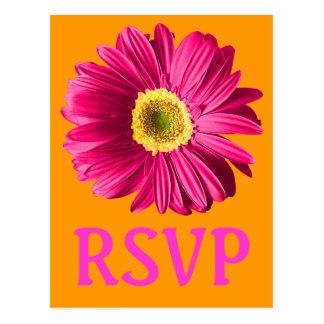 Pinkfarbenes Gänseblümchen-Blumen-UAWG oder Postkarte