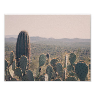 Plakat Arizona-Kaktus-|