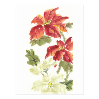Poinsettias Postkarte