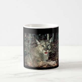 poma Katze Tasse