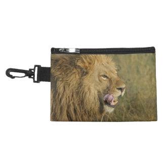 Porträt des Löwe-Mannes seinen Mund leckend Kulturtasche