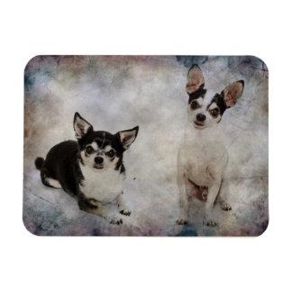 Porträt von Chihuahua zwei Magnet