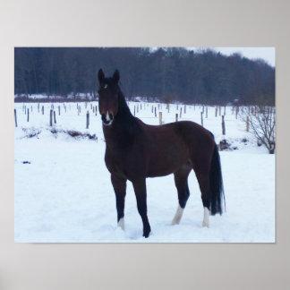 Poster - Pferd im Schnee