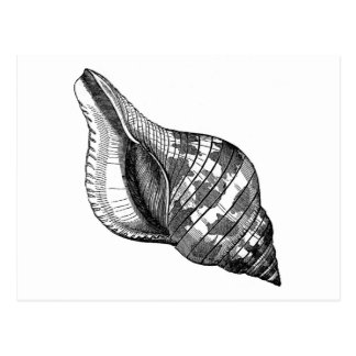 Postkarte - Seashell