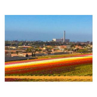 Postkarten-Blumen-Felder Karlsbad, CA Postkarte