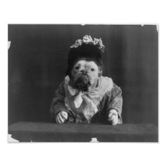 "Print ""Dog dressed in flower bedecked bonnet"" Poster"