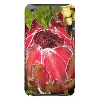 Protea-Blumenstrauß iPod Case-Mate Hüllen
