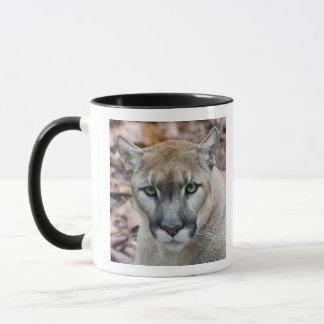 Puma, Berglöwe, Florida-Panther, Puma Tasse