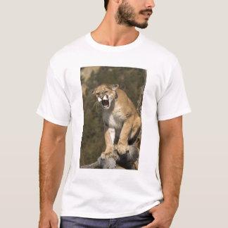 Puma oder Berglöwe, Puma concolor, Gefangener - T-Shirt