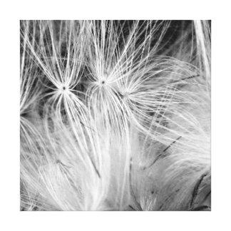 Pusteblume Schwarz Weiß Leinwand Druck