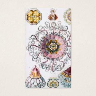 Quallen Ernst Haeckels Peromedusae Visitenkarte