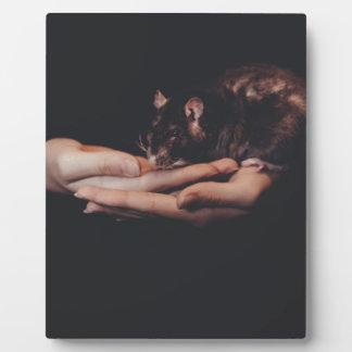 Ratte in der Hand… Fotoplatte