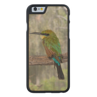 Regenbogen Bieneesser Vogel, Australien Carved® iPhone 6 Hülle Ahorn