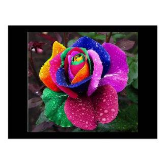 Regenbogen-Rose Postkarte