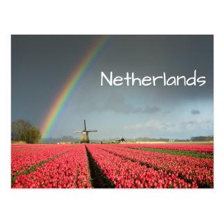 Regenbogen, Tulpen und Windmühlentextpostkarte Postkarte